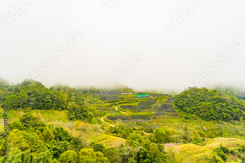 Deurstickers Wit Green tea plantation farm landscape hill cultivation