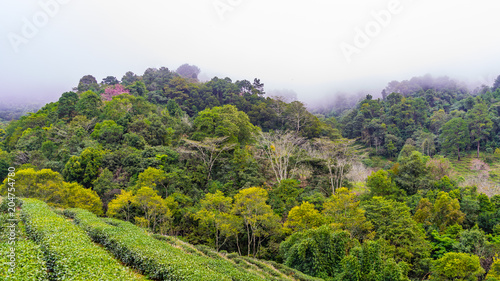 Staande foto Pistache Green tea plantation farm landscape hill cultivation