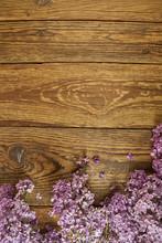 Kwiaty Bzu Na Drewnianym Tle