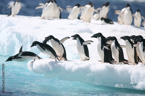 Adelie penguins jump into the ocean from an iceberg Fototapet