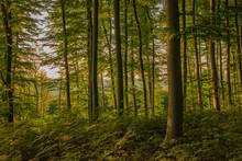 Alkonyat Az Erdőn