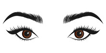 Beautiful Brown Eyes. Vector Illustration