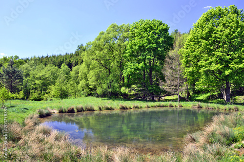 Foto  Small pond in the forest at  sunny day, Low Beskid, Poland