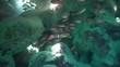Soldatenfische in einer Grotte