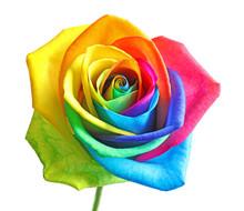 Amazing Rainbow Rose Flower On...