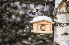 Birds Having Fun In The Snow A...