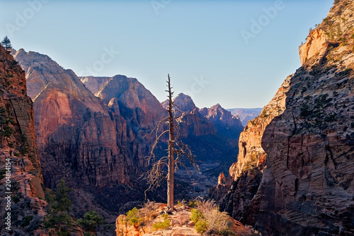 Foto op Canvas Blauwe hemel Landscape view of Zion valley with dry tree foreground, Utah