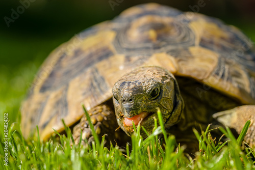 Tuinposter Schildpad Schildkröte