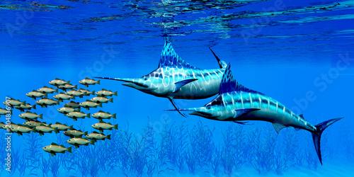 Marlin and Bocaccio Rockfish - Predatory Blue Marlin fish hunt a school of Bocaccio Rockfish over a kelp bed on the ocean floor Canvas Print