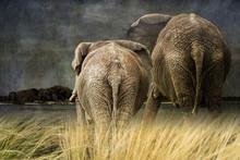 Elephants Weather The Storm