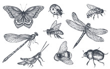 Insects Sketch Decorative Set ...