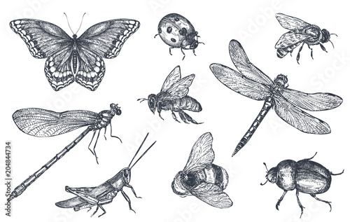 Carta da parati Insects sketch decorative set in sketch style