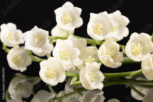 Staande foto Lelietje van dalen Spring flowers of Convallaria majalis isolated on black background, mirror reflection