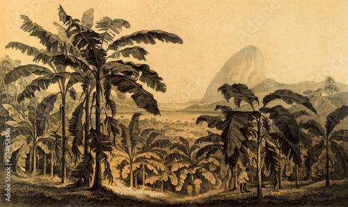 Natura Ameryki Południowej.