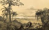 Natura Ameryki Południowej. - 204860342