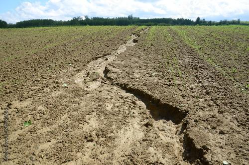 Fotografie, Obraz Erosione del suolo
