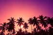 canvas print picture - Tropical sunset coconut palm trees silhouettes