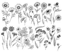Hand Drawn Wild Hay Flowers. M...