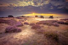 Hoge Veluwe Sand Heathland In ...