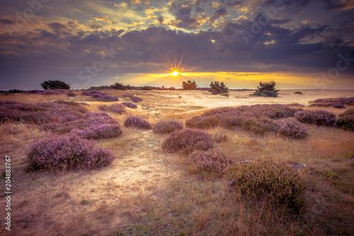 Photo Hoge Veluwe Sand Heathland in retro colors