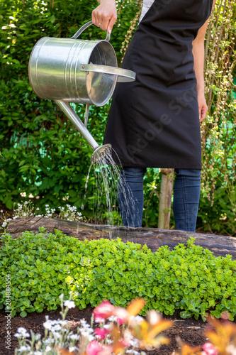 Fototapeta Unrecognisable woman watering flower bed using watering can. Gardening hobby concept. Flower garden. obraz na płótnie