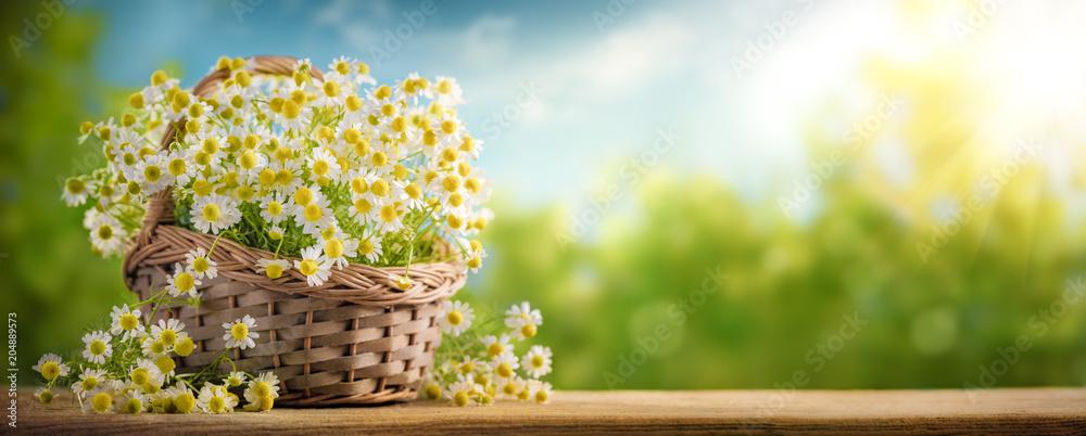 Fototapety, obrazy: Basket of chamomile flower