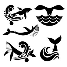 White And Black Wild Whale In Sea Waves And Water Splashes Vector Icons
