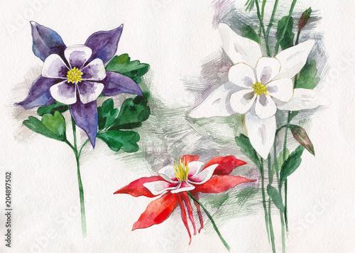 Kwiaty w akwarela. Roślin z czerwonymi, białymi, fioletowymi kwiatami