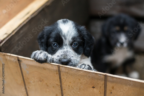 Cute Little puppy in a wooden box is asking to be adopted with hope Wallpaper Mural