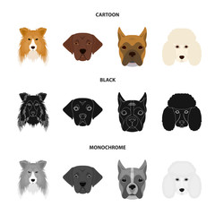 Muzzle of different breeds of dogs.Collie breed dog, lobladore, poodle, boxer set collection icons in cartoon,black,monochrome style vector symbol stock illustration web.