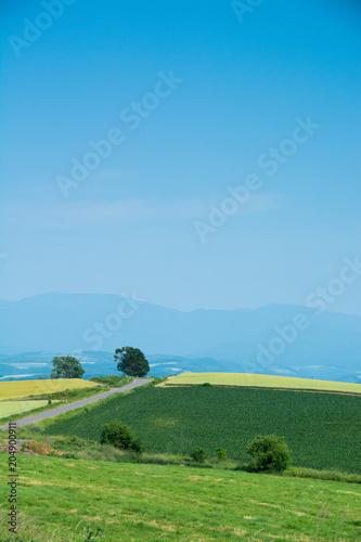 Foto op Aluminium Blauw 夏の田舎の丘