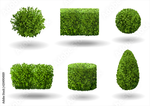 Foto Set of ornamental plants and trees for landscaping
