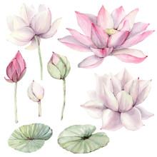 Watercolor Flowers Set In Vint...
