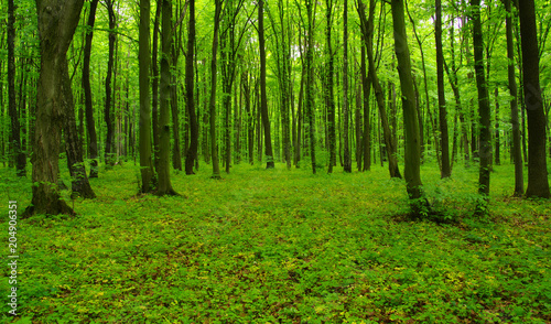 Forest trees in spring #204906351
