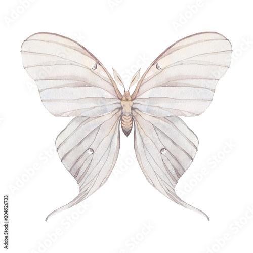 Carta da parati Watercolor butterfly