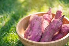 Red Sweet Potato In A Woven Basket Over Grass Background Closeup.Organic Sweet Potatoes Gardening. Sweet Potatoes Growing.