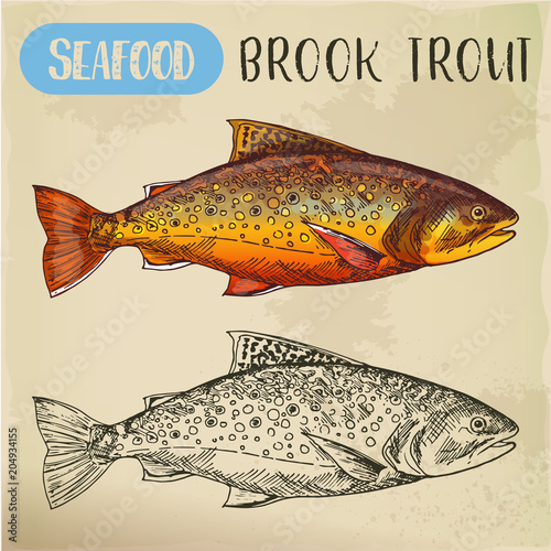 Cuadros en Lienzo Sketch of brook trout or squaretail. Seafood, fish