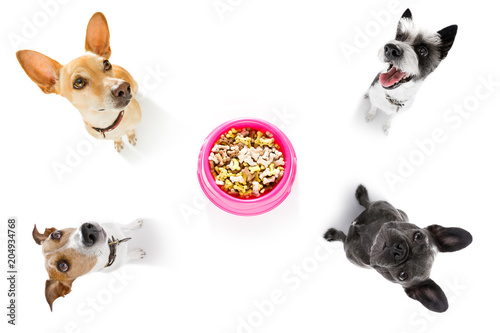Foto op Canvas Crazy dog hungry couple of dogs with food bowl