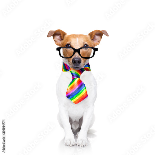 Foto op Plexiglas Crazy dog gay pride dog