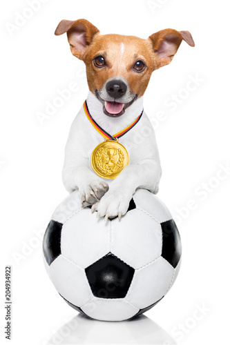 Foto op Canvas Crazy dog soccer jack russell dog