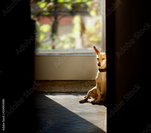 Foto op Canvas Crazy dog dog relaxing under the sun at home