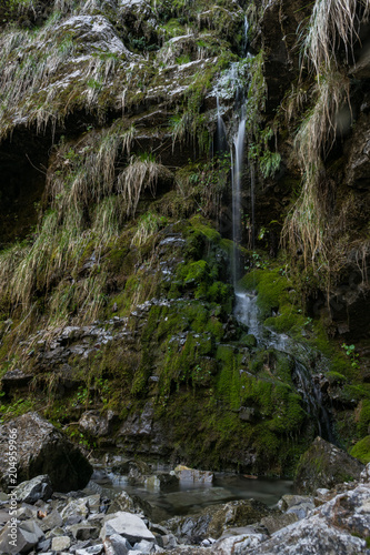 Spoed Foto op Canvas Grijze traf. Piccola cascata in un bellissimo bosco delle Alpi italiane