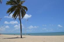 Palm Tree At White Sandy Beach, Cumbuco, Brazil
