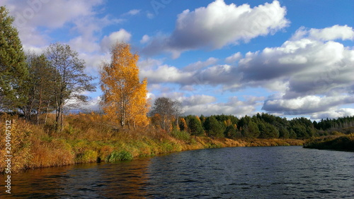 Foto op Canvas Herfst Golden autumn on a small river - view from the water on the yellow trees on the banks and the blue sky with clouds