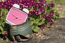 Pink Alarm Clock In A Broken Pot Against The Backdrop Of Primul.