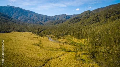 Fotobehang Honing Rio en el Bosque_Pico_Duarte-01