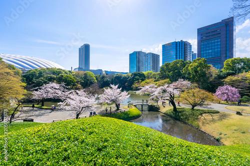 Tokyo, Japan - March 30, 2018 :Koishikawa Korakuen Garden is popular cherry blossom spot in Tokyo,Japan