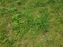 Green Grass And Dirt