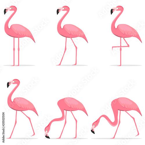 Canvas Prints Flamingo Bird Flamingos, various poses of flamingos.