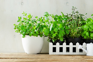 Fototapeta Przyprawy Green fresh aromatic herbs - melissa, mint, thyme, basil, parsley on white background. Banner collage frame from plants. Copyspace.